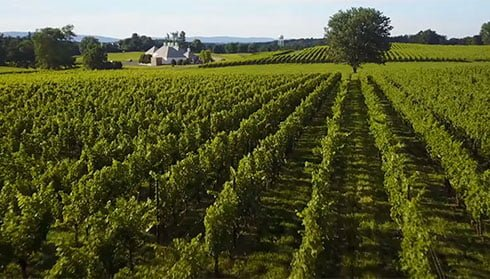 Boxwood Estate, Fauquier Winery, A member of the Fauquier Wine Council, Virginia Vineyard.