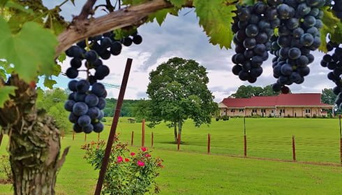 Molon Lave Vineyard, Fauquier Winery, A member of the Fauquier Wine Council, Virginia Vineyard.
