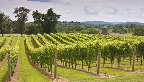 Three Fox Vineyards, Fauquier Winery, A member of the Fauquier Wine Council, Virginia Vineyard.