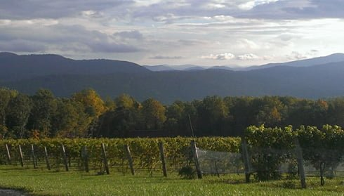 Fox Meadow Winery, Fauquier Winery, A member of the Fauquier Wine Council, Virginia Vineyard.